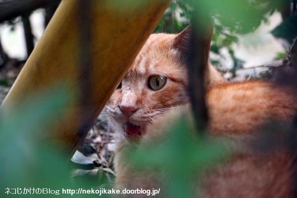 2016102203あなたが猫を見ているとき、猫もあなたを見ているのだ。2