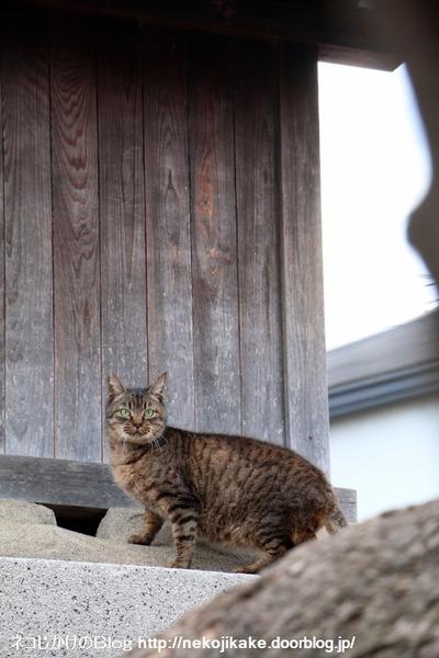 2016020307守り猫。3