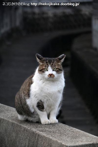 2017011713猫の態度。4
