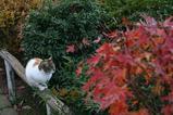 ネコのいる風景。その2
