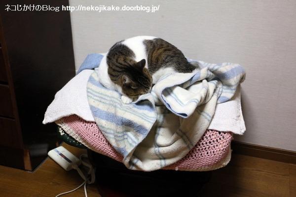 2017020406猫らしい寝方とは。1