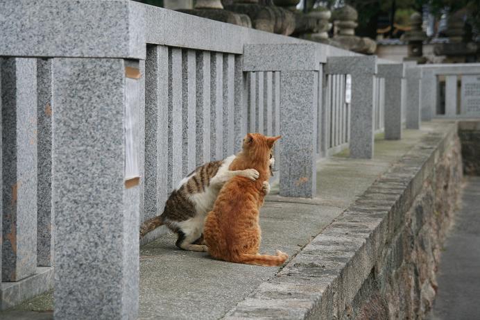外のネコ観察。その1