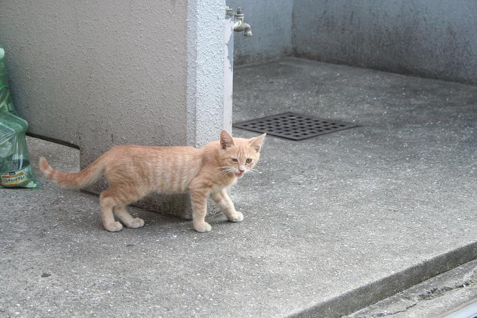 子ネコたちは今日も生きている。近所の子ネコ