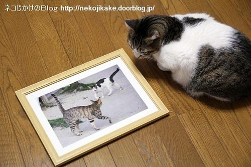 町猫2011@ギャラリーマゴット 作品2