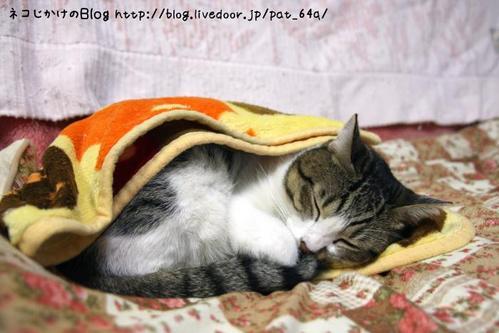 雨の日のネコは眠い。 シマ