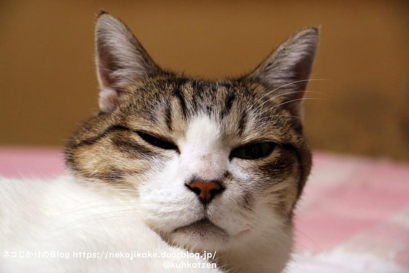 2021071901猫生の積み重ね。
