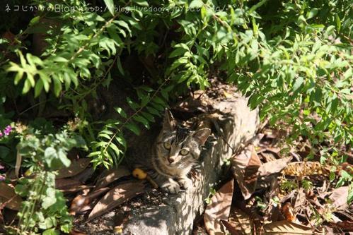 ネコはそこにいる。その2 茶トラ
