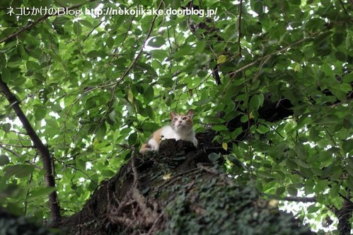 2013061802木登りネコ。