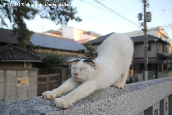 2014101702猫のポーズ。