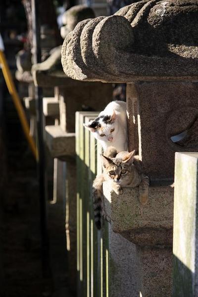 がんばれ!その5 キジトラ子ネコとミケちゃん