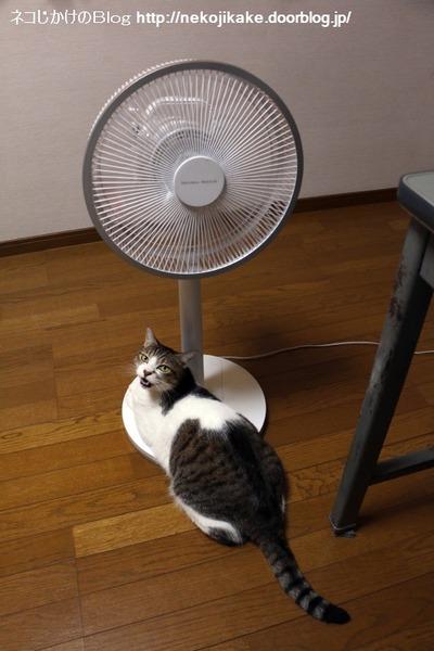 2016091201扇風機系猫。1