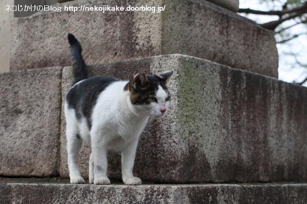 2016092206朝の神社猫。2