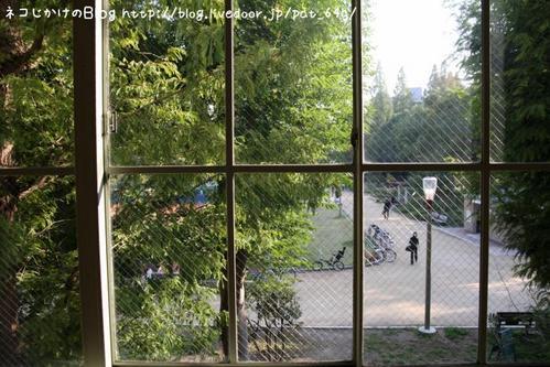 猫写真展を巡る。その5 窓から靭公園を眺める(みけさま)