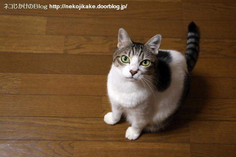 2019082501物言う猫は好きですか?1