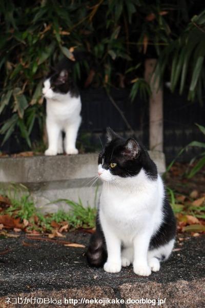 2015122106師走のネコたち。5