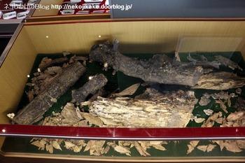 2018102113きのこ!キノコ!木の子!@大阪市立自然史博物館。9
