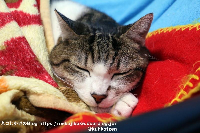 2020110902猫の寝顔。1