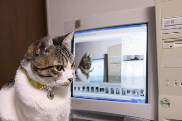 PCの中にもボクがおる。シマ1