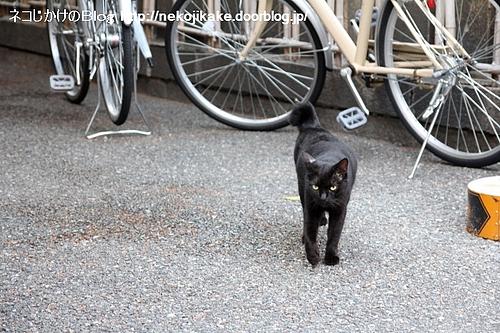 黒猫さん接近。