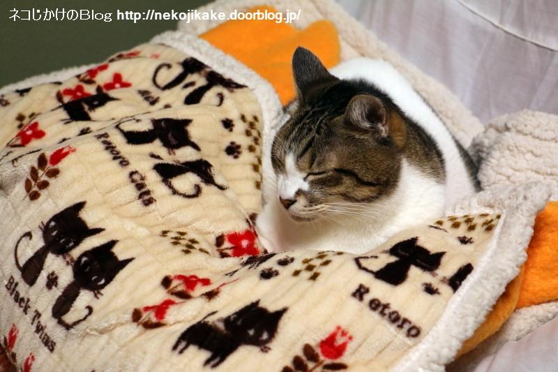 2015110301ねこの毛布。