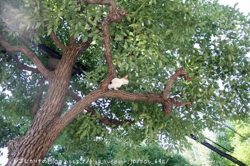 木登り。その2 三毛