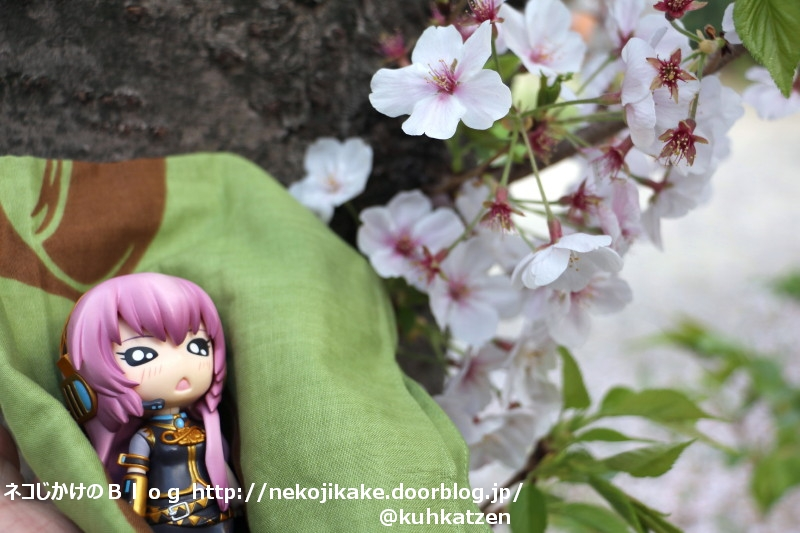 2020041004桜は何にも知らないけれど。2