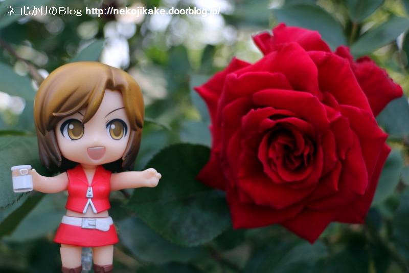 2018050509バラは気高く咲いて。2
