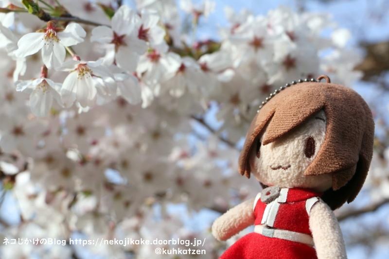 2021032923花見だ花見だ。
