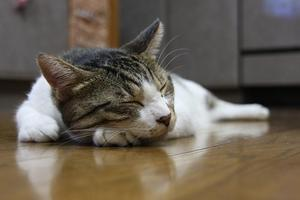寝子。シマ5