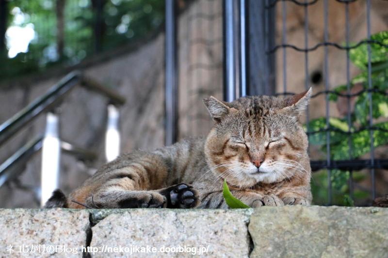2015071410納涼 外猫の場合。4