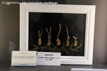 2018102109きのこ!キノコ!木の子!@大阪市立自然史博物館。5