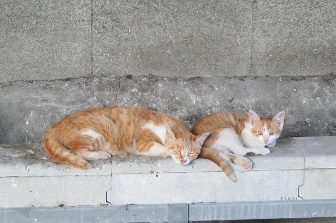 子ネコたちは今日も生きている。親子ネコ
