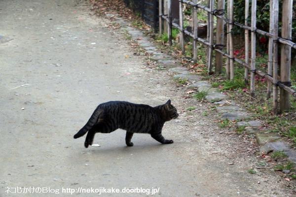 2017010113行く猫来る猫。2