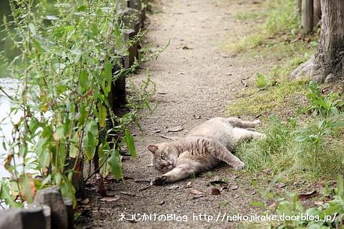行き倒れのネコがいますよ〜。助けないといけないですよ〜。