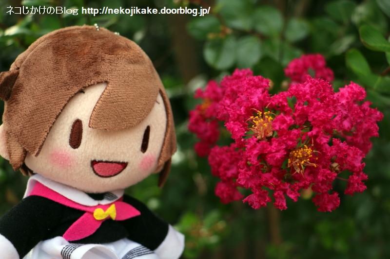 2018072805私には真っ赤な花がよく似合う。