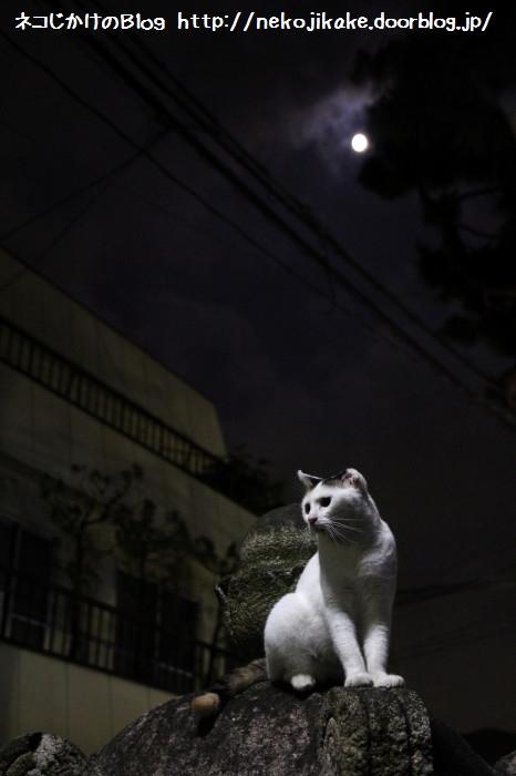 月はどっちに出ている?