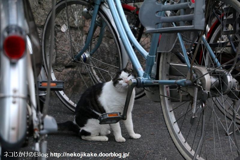 2015062806自転車の有効活用。2