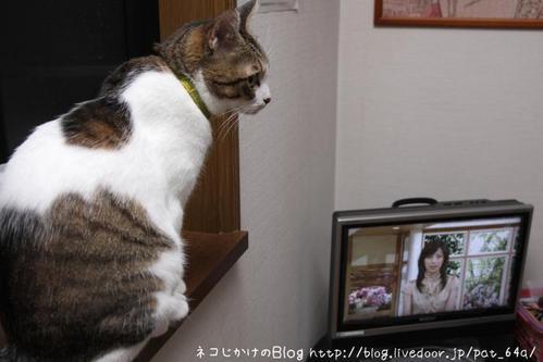 今日のテレビ。その2 シマ