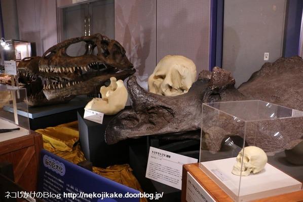 2017073027メガ恐竜展201@ 大阪南港ATCホール。25