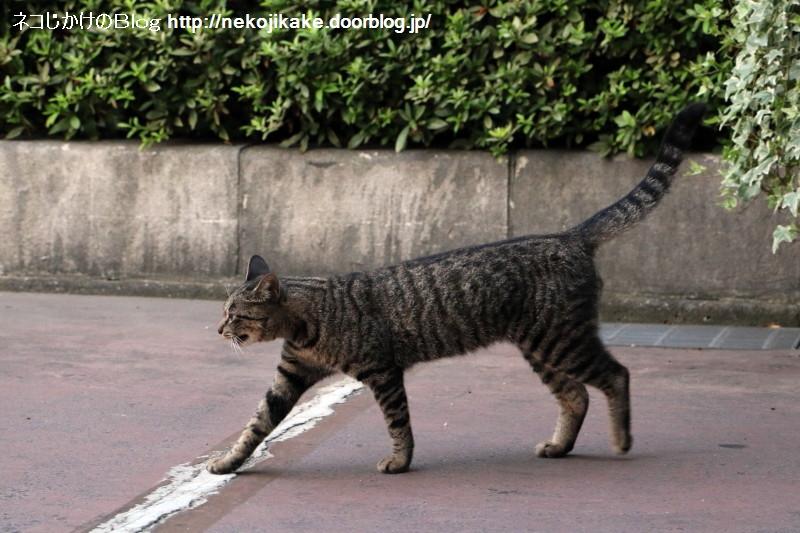 2015081007外猫はココにいる。3