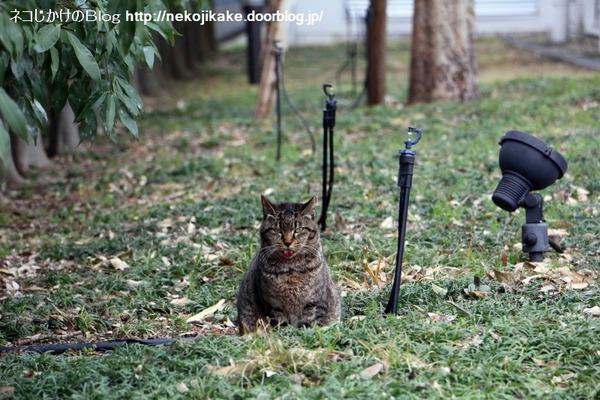 2016031305猫それぞれ。2