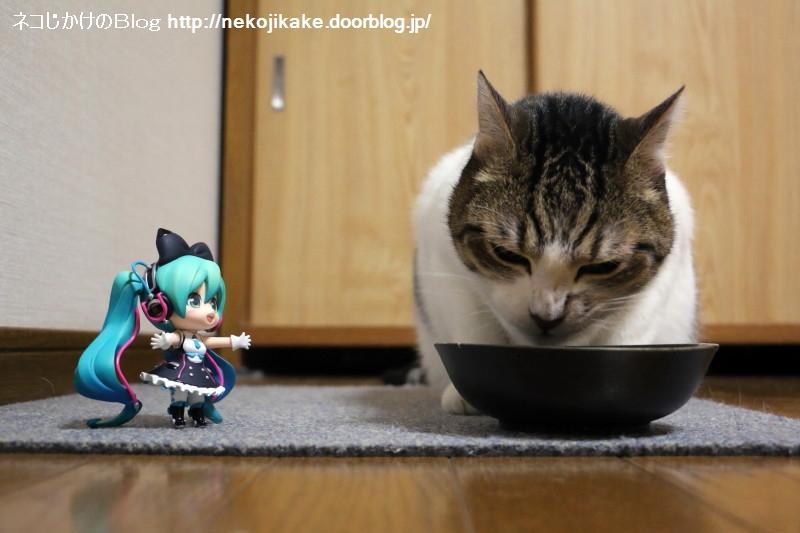 2018052502いっぱい食べるネコが好き。