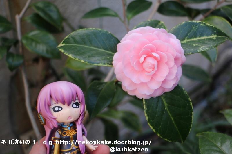 2020013009ここにもピンクの花が。2