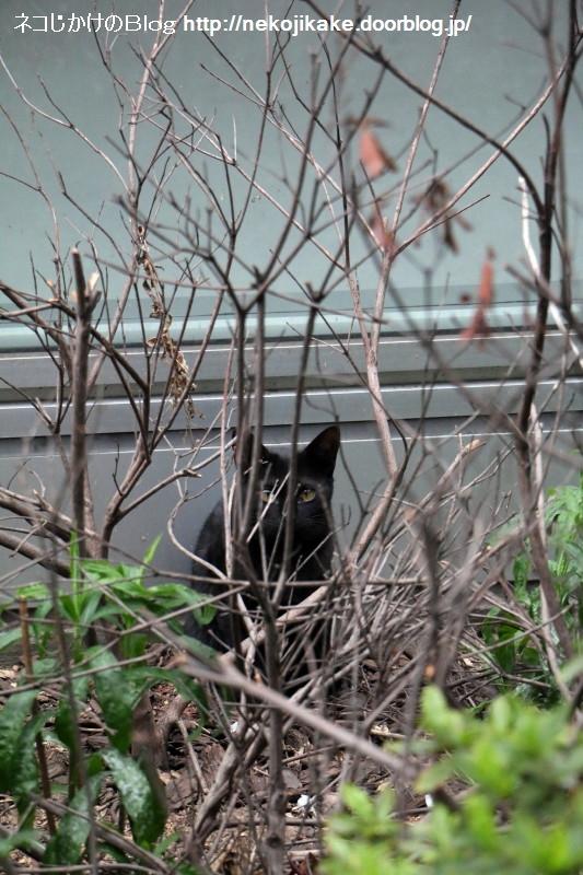 2017040605猫がこっち見てる。3