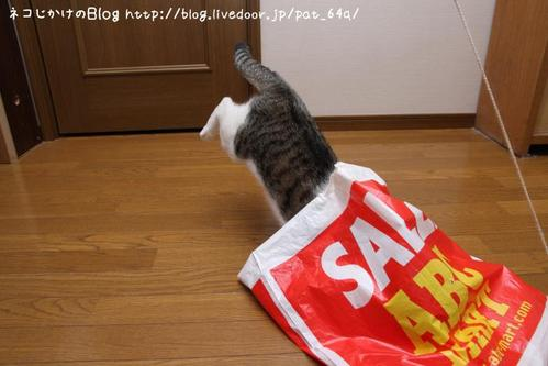 Dive into the BAG. その1 シマ