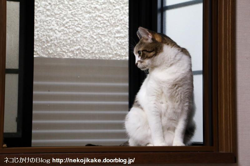 2017090603出窓の猫。1