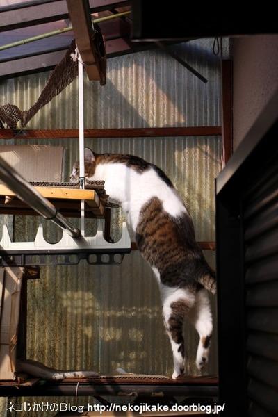 2017010602猫は外を目指す。2
