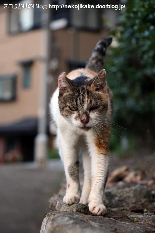2015082409この世の中に猫の居場所がないわけがない。5