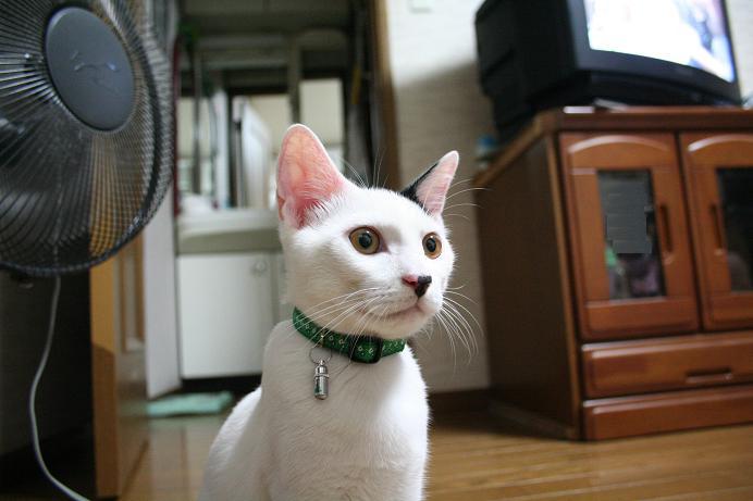 じっとネコを見る。クロ