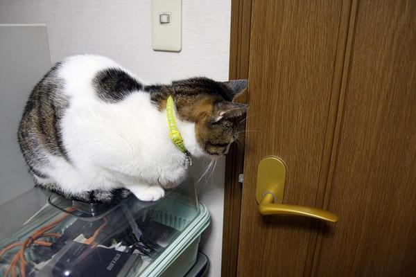 部屋の扉を開けて。シマ1